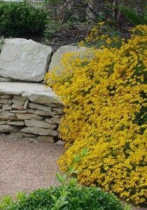 Xeric plants no lo h20 on pinterest achillea millefolium drought tolerant plants and - Tough perennial bloomers drought insect and pest resistant flowers ...