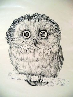 Owl art in pencil