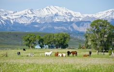 meeteetse,CO   Wyoming