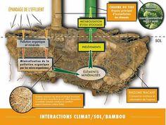 Bio puration phytorem s implante au mexique pollution d pollution - Depollution par les plantes ...