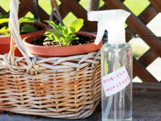 How to make a natural, non-gross-smelling mosquito repellent:      In a spray bottle, mix and shake well to blend:        2 cups witch hazel      15 drops citronella essential oil      15 drops lemongrass essential oil      5 drops lavender essential oil      5 drops peppermint essential oil