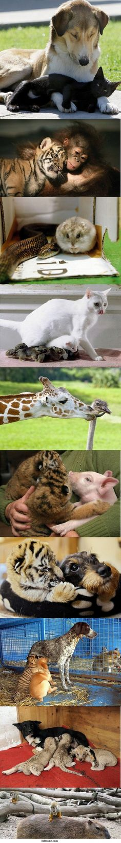 Cute Animal Friendships