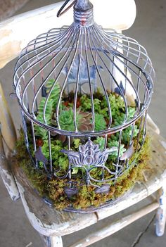 Succulent garden in a birdcage. It would be lovely at a wedding too.