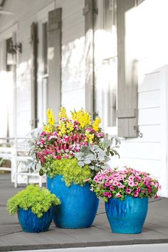 Container hanging basket ideas on pinterest container garden container gardening and petunias - Growing petunias pots balconies porches ...
