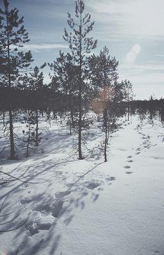 ♥ the Winter