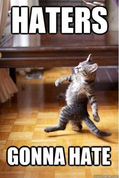 picture of cat with caption that says, haters gonna hate | haters gonna hate - Pimp Strut Cat