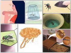 Get Rid Of Ticks Naturally With Salt