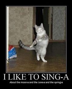 cat pics with funny captions | Most Captions Funny Cat Pictures, Most Captions