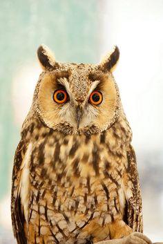 Cloudy Owl