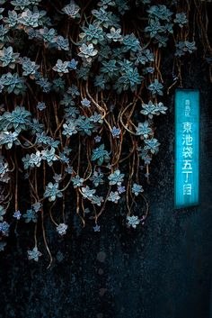 Cascade of blue flowers -ikebukuro Encontrado en flickr.com