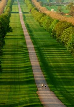 """""""A Walk Through The Park"""" Windsor Great Park, Berkshire, UK this is the road that leads to Windsor Castle, photo by Jack Hood"""