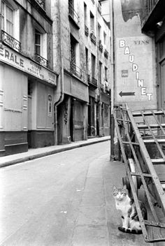 Alfred Eisenstaedt - Cat in the street, Paris, 1963.