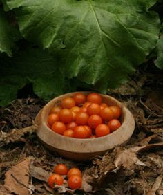 Pruning Tomatoes: How to manage your plants for better health and better fruit. Read the full article here http://www.finegardening.com/how-to/articles/pruning-tomatoes.aspx