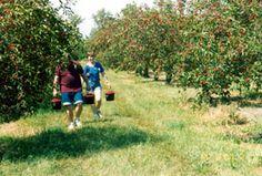 Choice Orchards   Orchard/Farm Market