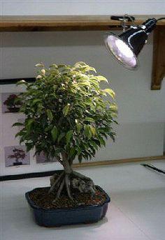 Grow Light Kit - 130 WattFull daylight spectrum 26 Watt Fluorescent grow-light 130 watt equivalent