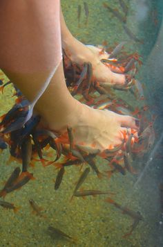 Fish pedicure on pinterest fish pedicure pedicures and fish for Fish pedicures illegal in 14 states