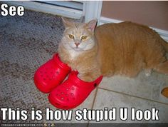 crocs - but no one knows comfort like cats...
