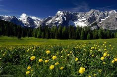 wildflowers, Sorapis, Lago Misurina, Dolomites, Italy, photo