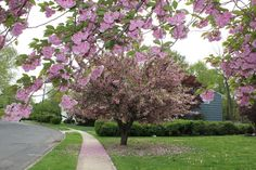 Blossom!!