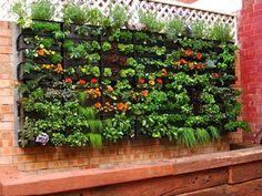 Grow Foods Not Lawns