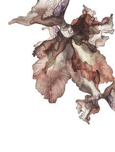 Piet Boon Styling by Karin Meyn | Ink flower
