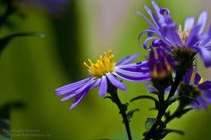 Garden flower      stunning!
