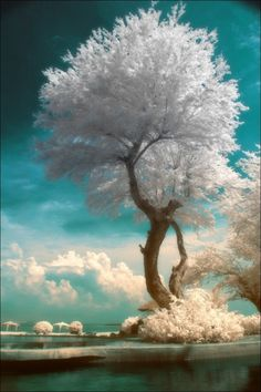 Ethereal tree.../