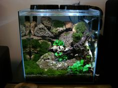 Aquascaping Planted Tanks Aquariums on Pinterest Aquascaping ...