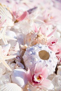 beautiful coastal sea shells, white and pink x