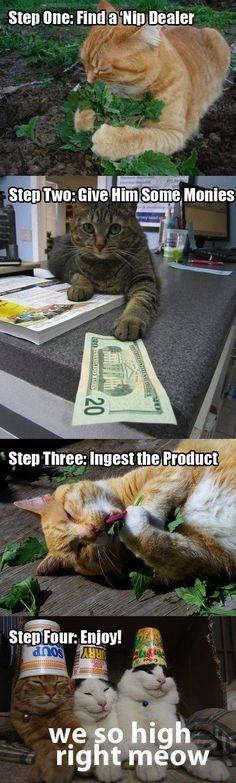 Ha i just love cats