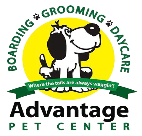 Advantage Pet Center Photo Gallery Dog Pool Pool Water Features Lap Pools Backyard