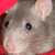RATS HAVE FEELINGS TOO