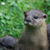 ALL ABOUT OTTERS