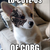 The Corg Collective