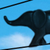 Elephant on a Wire