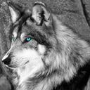 Wolf's Beauty, Sensual Nudity, Erotica and Wisdom