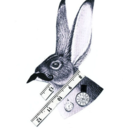 Father Rabbit's Notebook