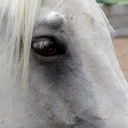 The Equine Story