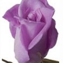 Purple Rose Emporium