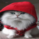 What if Cats Wore People Clothes