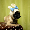 Pugs From Outer Space