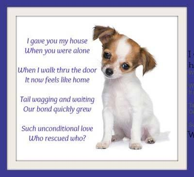 Chihuahua Puppy Pictures Chihuahua Quotes Chihuahua Puppies
