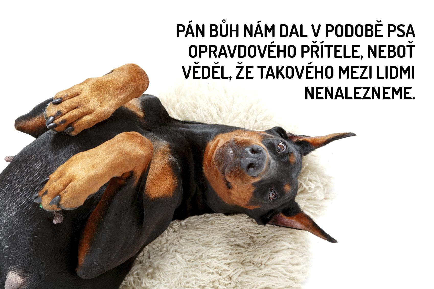 citáty o psech Nejkrásnější citáty o psech | ostatní | Pinterest citáty o psech