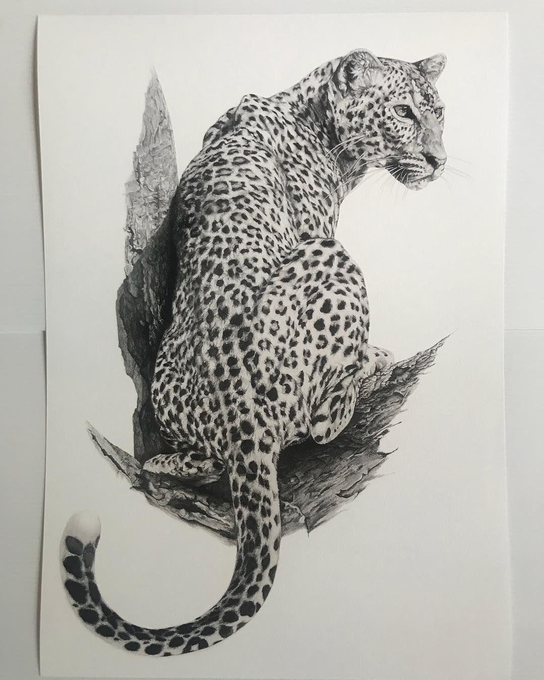 Big Cat CHEETAH pencil drawing artwork print A3 A4 sizes signed art