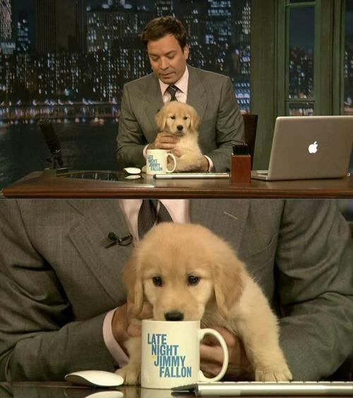 Late Night With Jimmy Fallon L Adorable 3 Cute Baby Animals