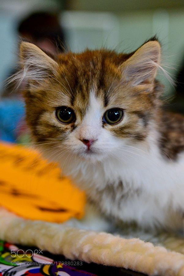 Kitten by feneek2010