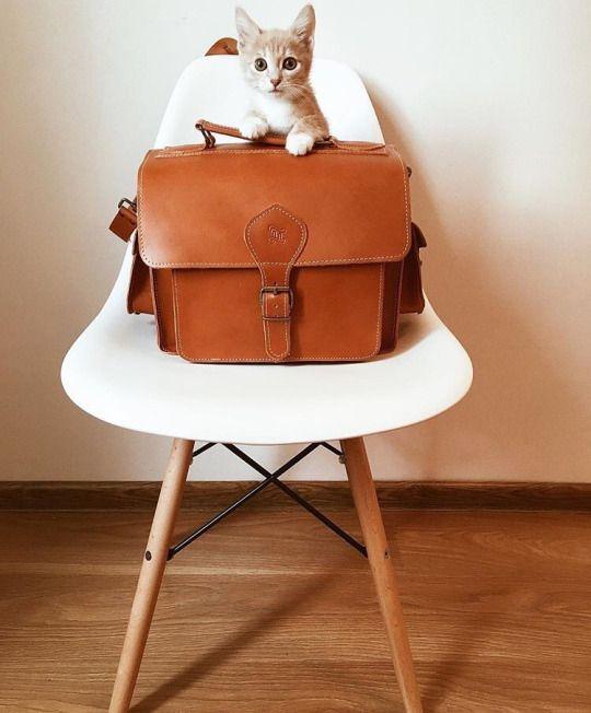 Kitty www.grafea.com #grafea #leather #camerabag #그라페아 #카메라가방 #가죽 #moda #derisırtçanta #blog #tarz #seyahat #sonbahar #güzellik