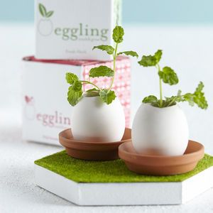 Grow it yourself mini garden egg kit easter gifts hopping down 21 alternative easter gifts for babies and toddlers negle Gallery