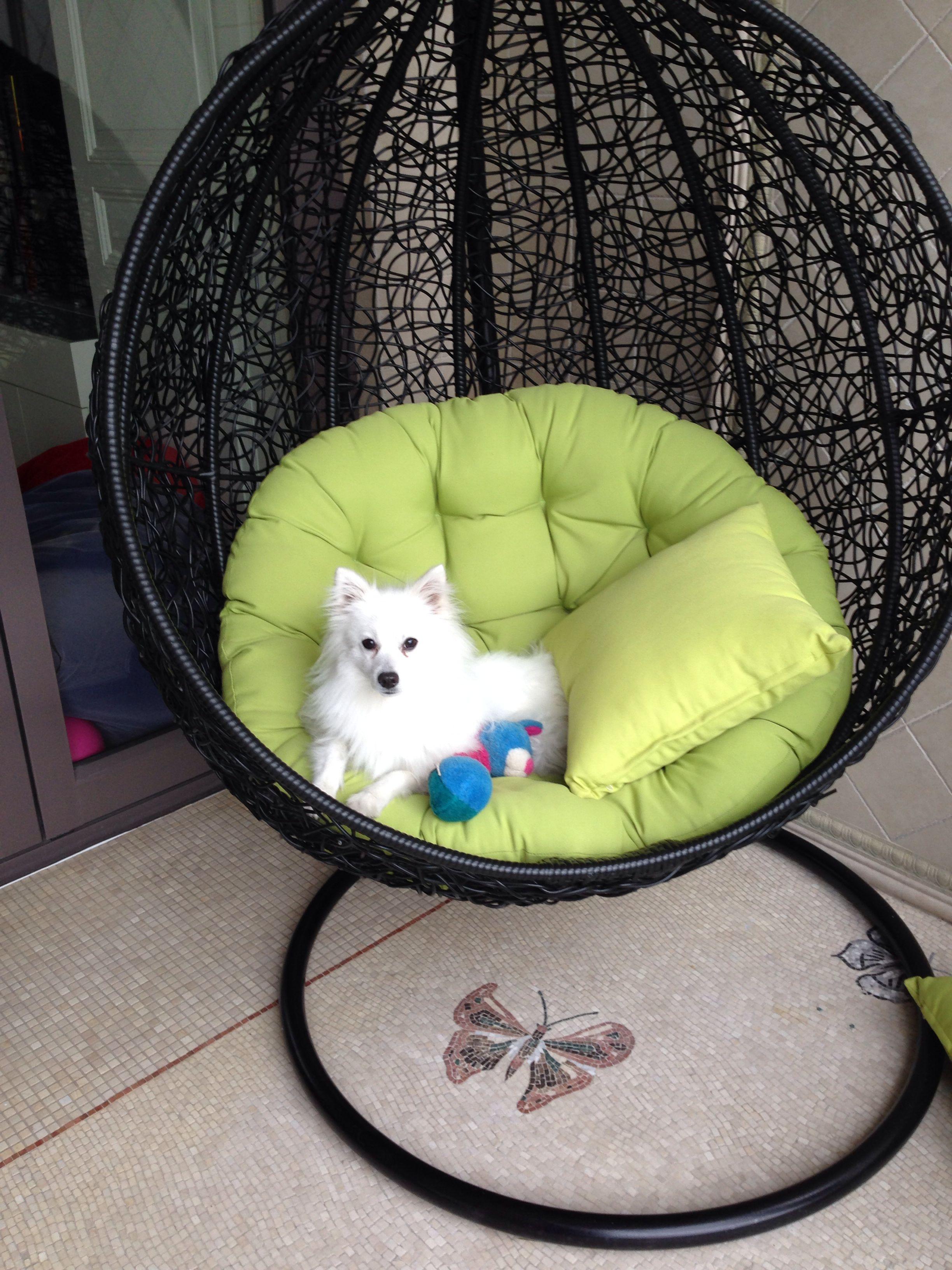 Cute dog on swing chair. Her name is Lexi (Görüntüler ile)