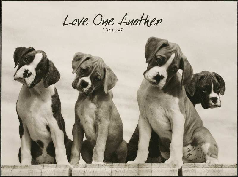"""[""""Ever get the feeling that you're not quite seeing the whole picture? This image of four quizzical dogs inspires curiosity and wonder. Accompanied with the scriptural reminder to love one another, this piece would look perfect in your office or den.<br><br><b>Product Details:<\/b><br>Size: 16\""""(W) x 12\""""(H)<br>""""] $32.99"""